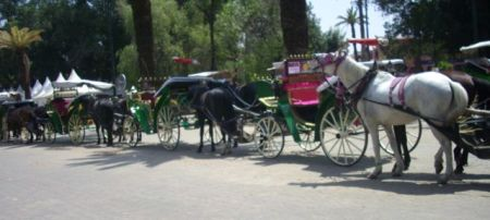 lesjardinsdelakoutoubia-marrakecharil201410